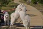 My sister Charlotte and I had a little dance before the walk.